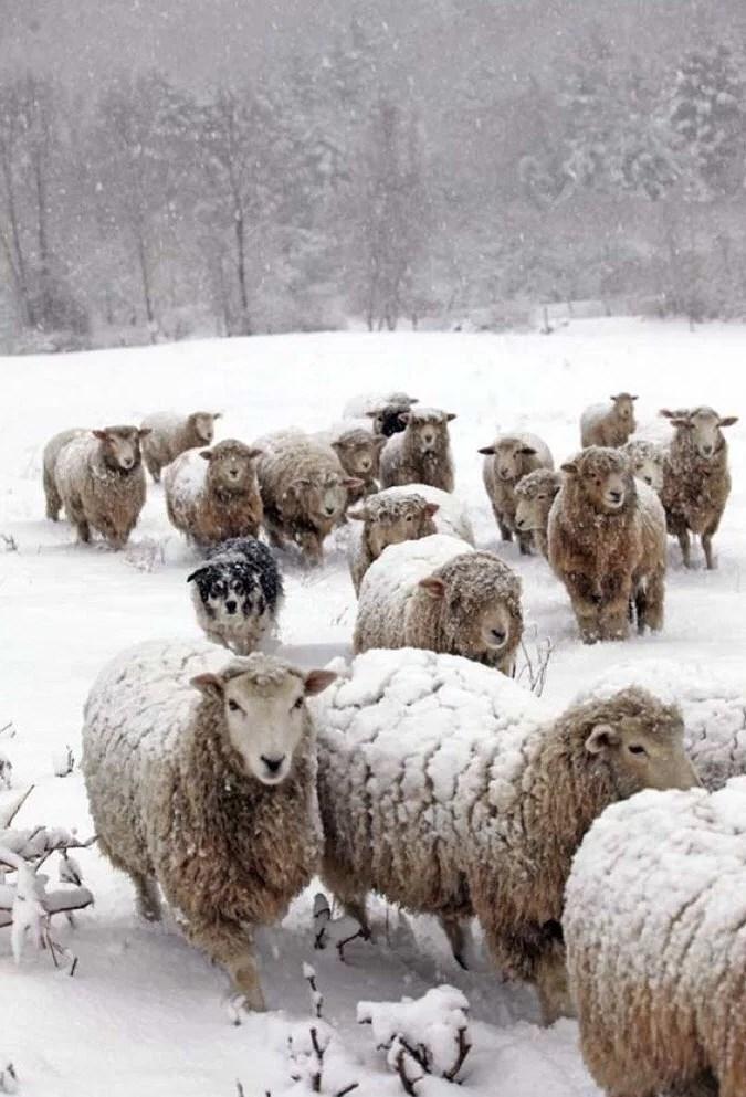 Nu vill jag ha snö