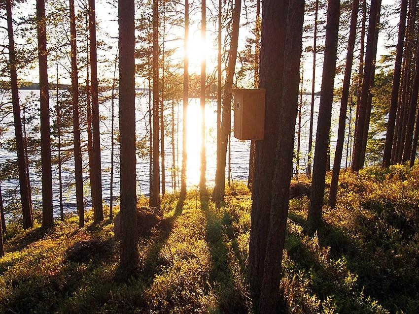 merenhelmi-veera-blogi-keski-suomi