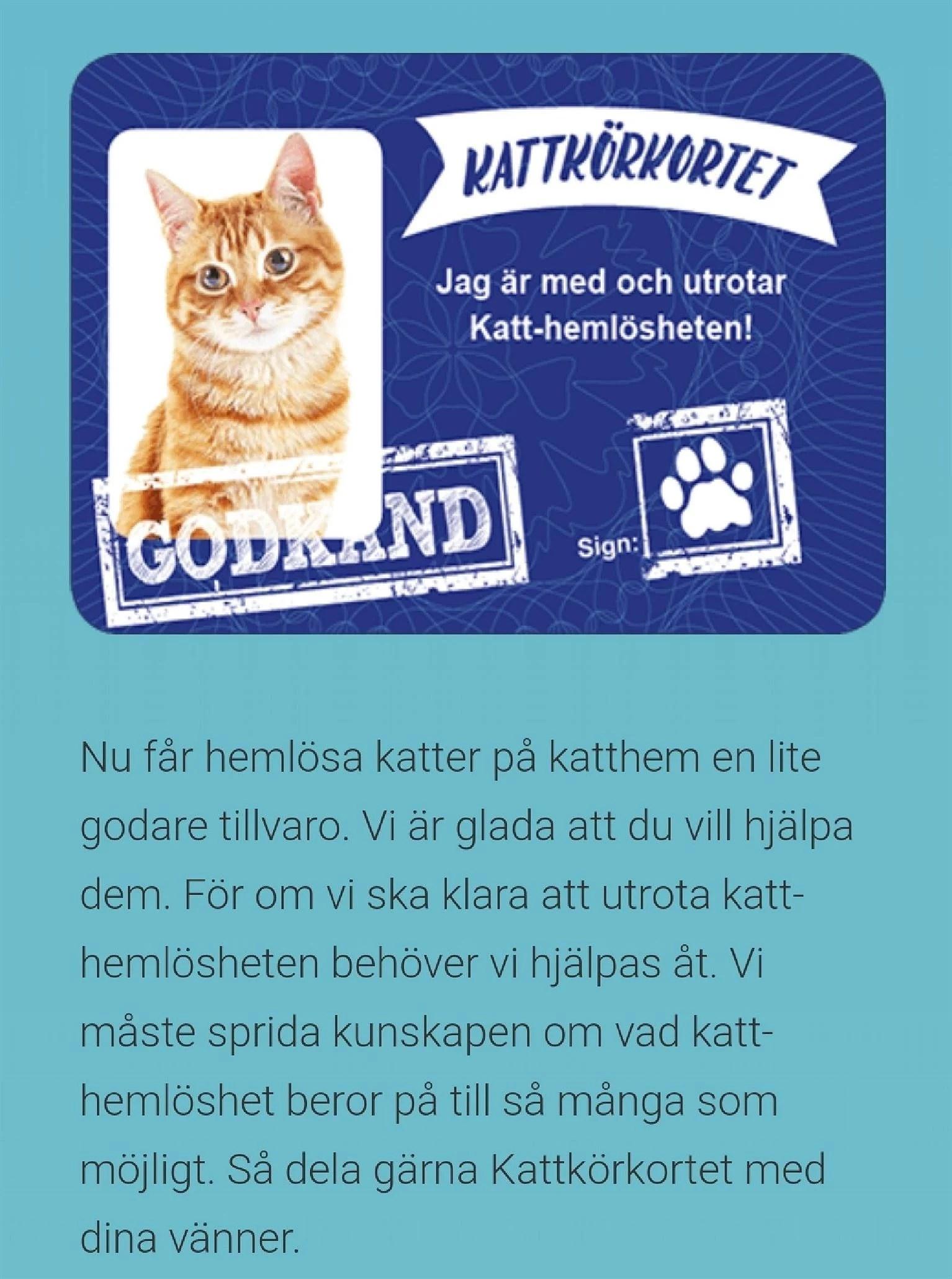 Ta kattkörkortet och gör en hemlös kisse glad...