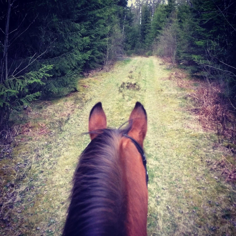 Älskade underbara hästar