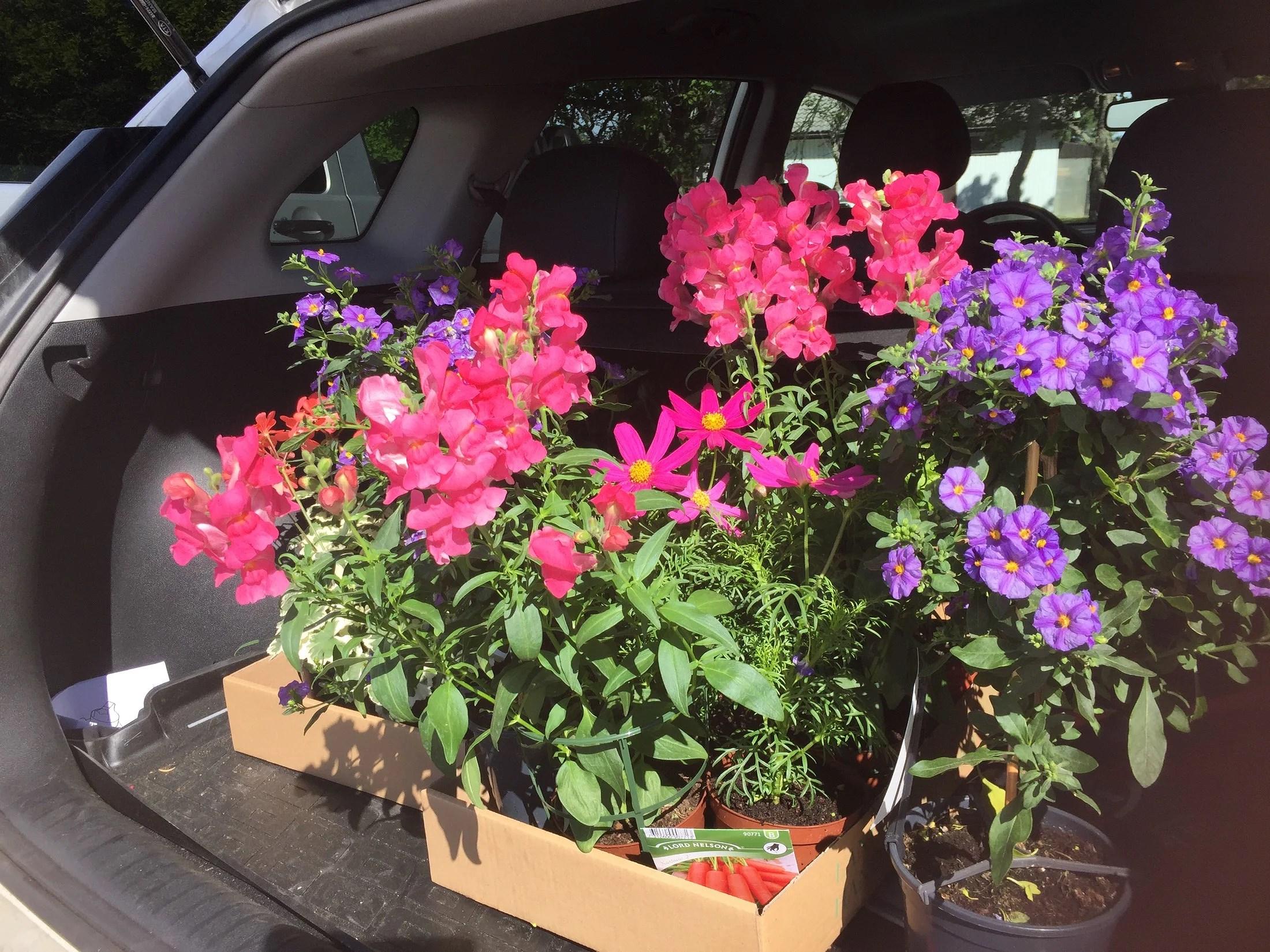 En blomma gör ingen sommar