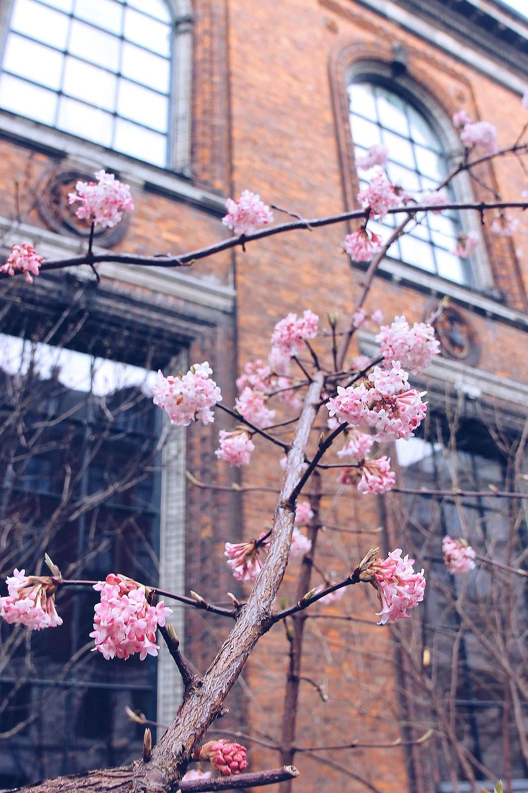 Blooms in Copenhagen