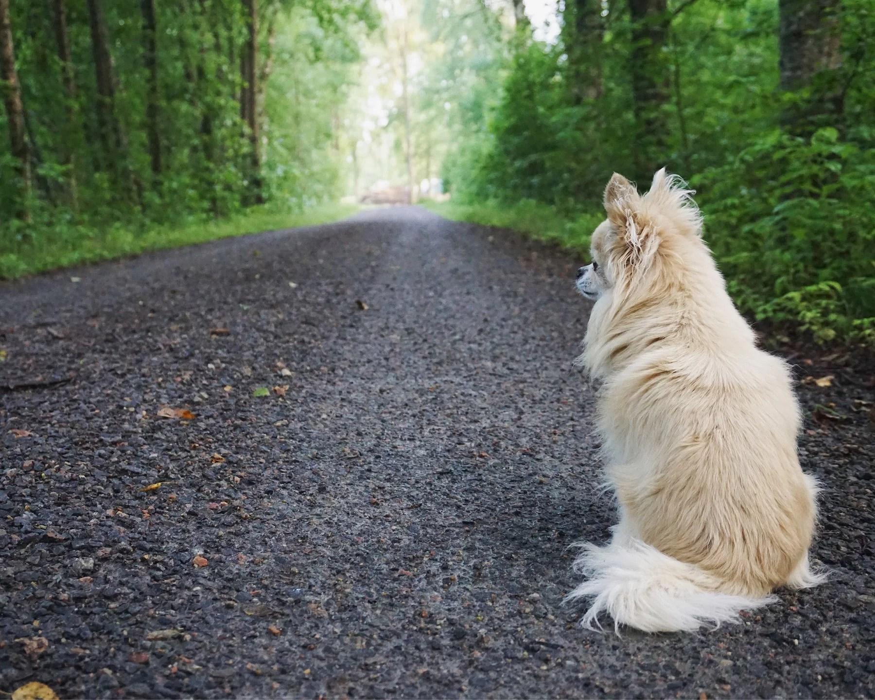 Promenad (video?)