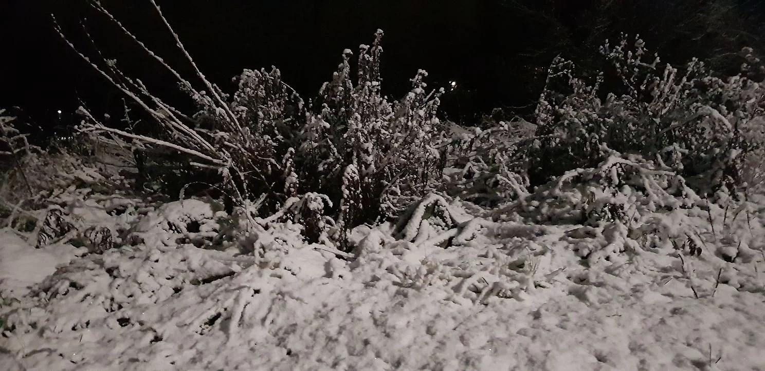 Det lös i ögonen & snö