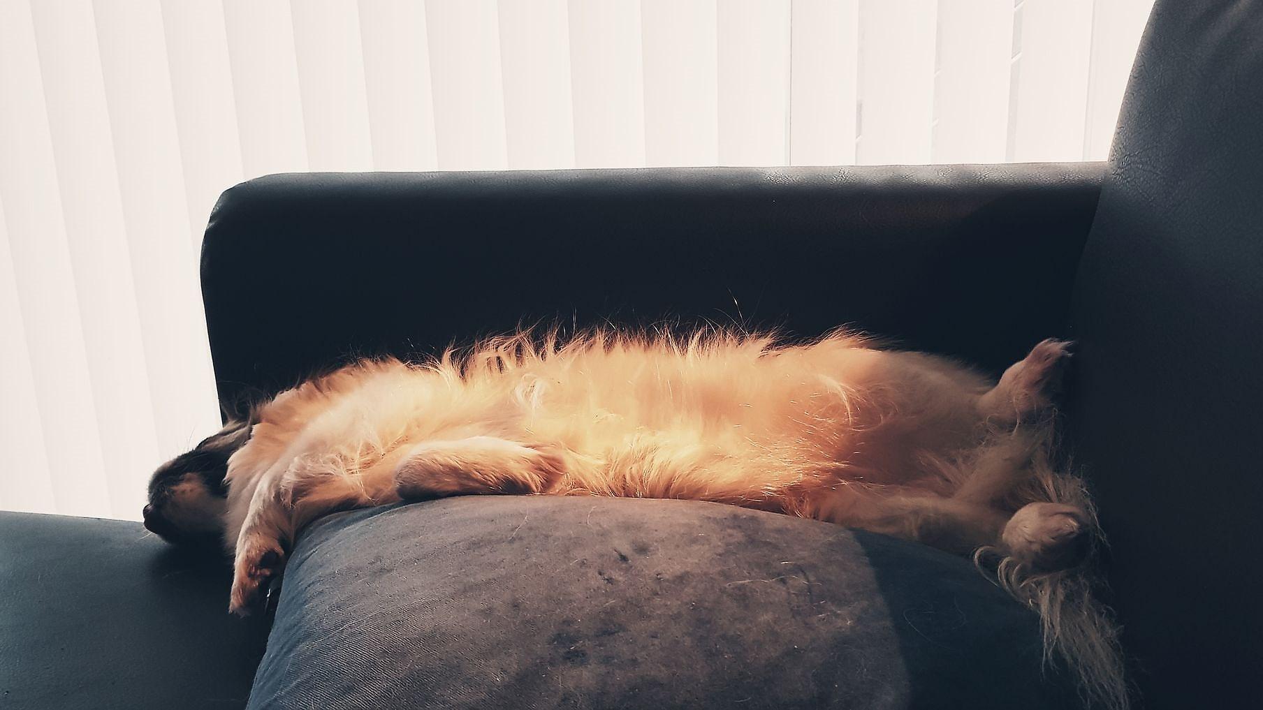 Skikkelig slapp søndag