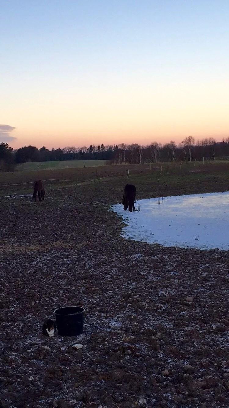 Knäppa häst