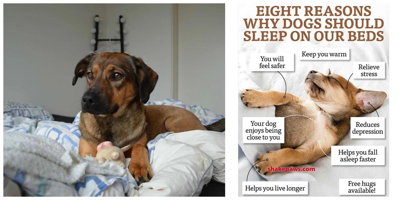 5 grunde // til at putte med din hund