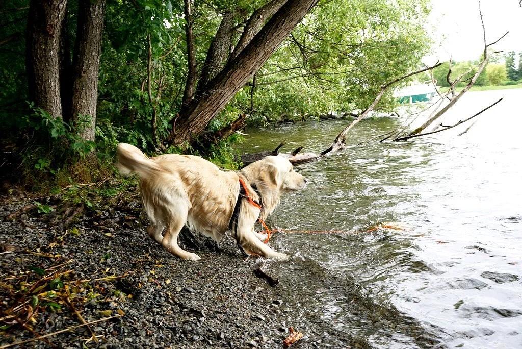 Låta hund bada