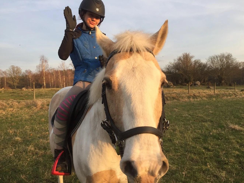 Hästarnas veckoplanering V.14