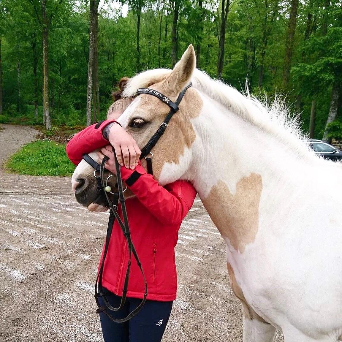 This or that- Hästrelaterat