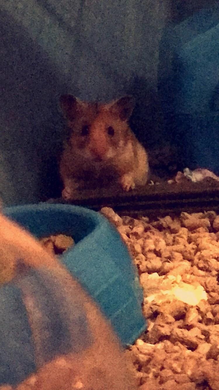 Hamster fick