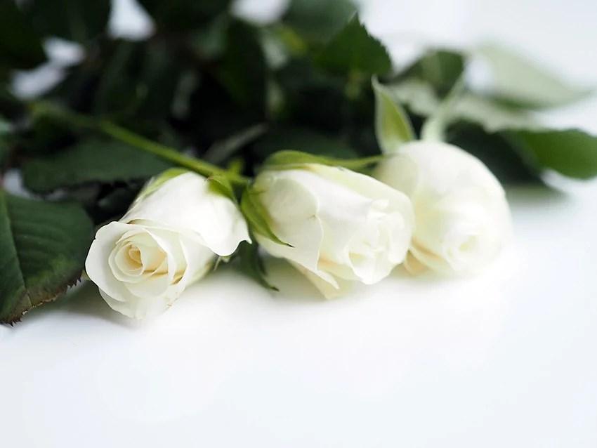 Ruusuja-2