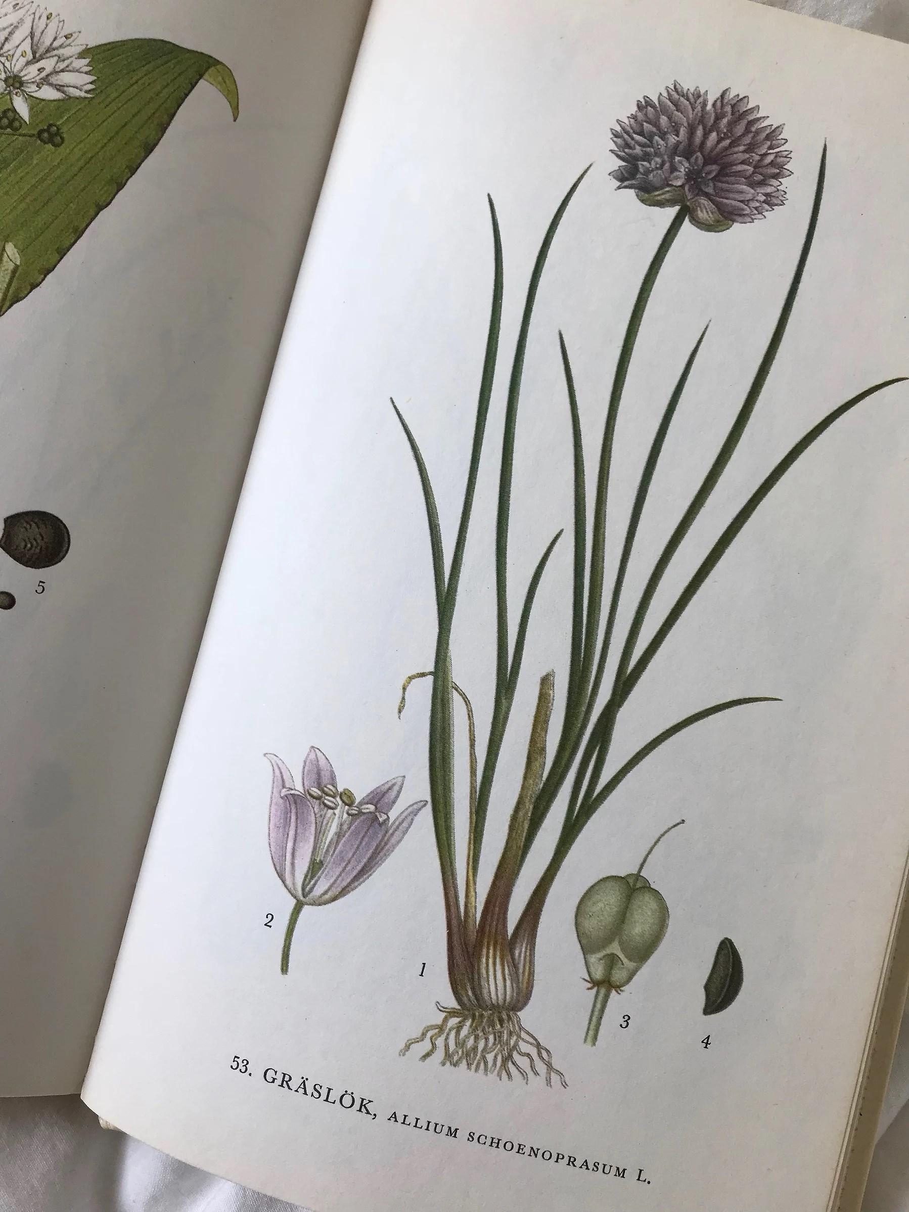 Flora. Nordens flora. Botanik. Botanik poster. Loppisfynd. Second hand. Handla på loppis.