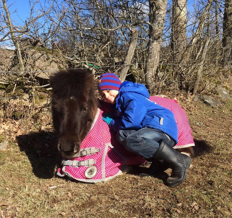 Stoooor häst