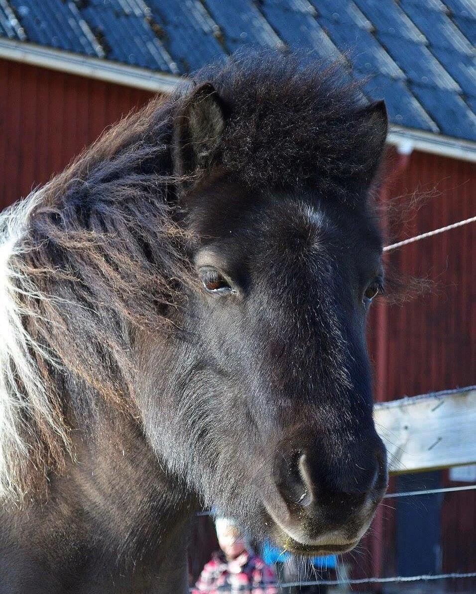 Slakthus till ponnyn