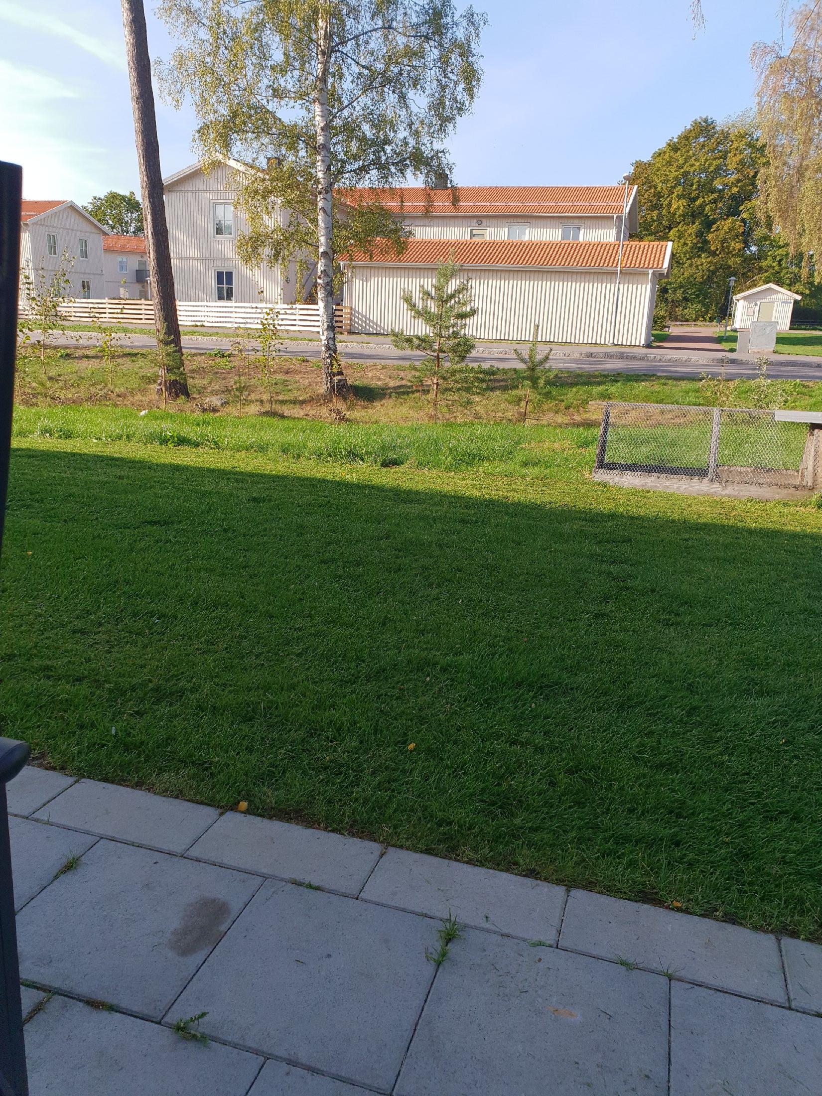 En väldigt grön gräsmatta