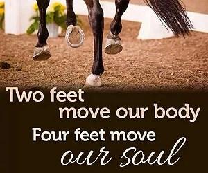 Bildresultat för häst citat