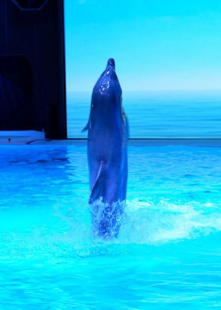 delfiner4