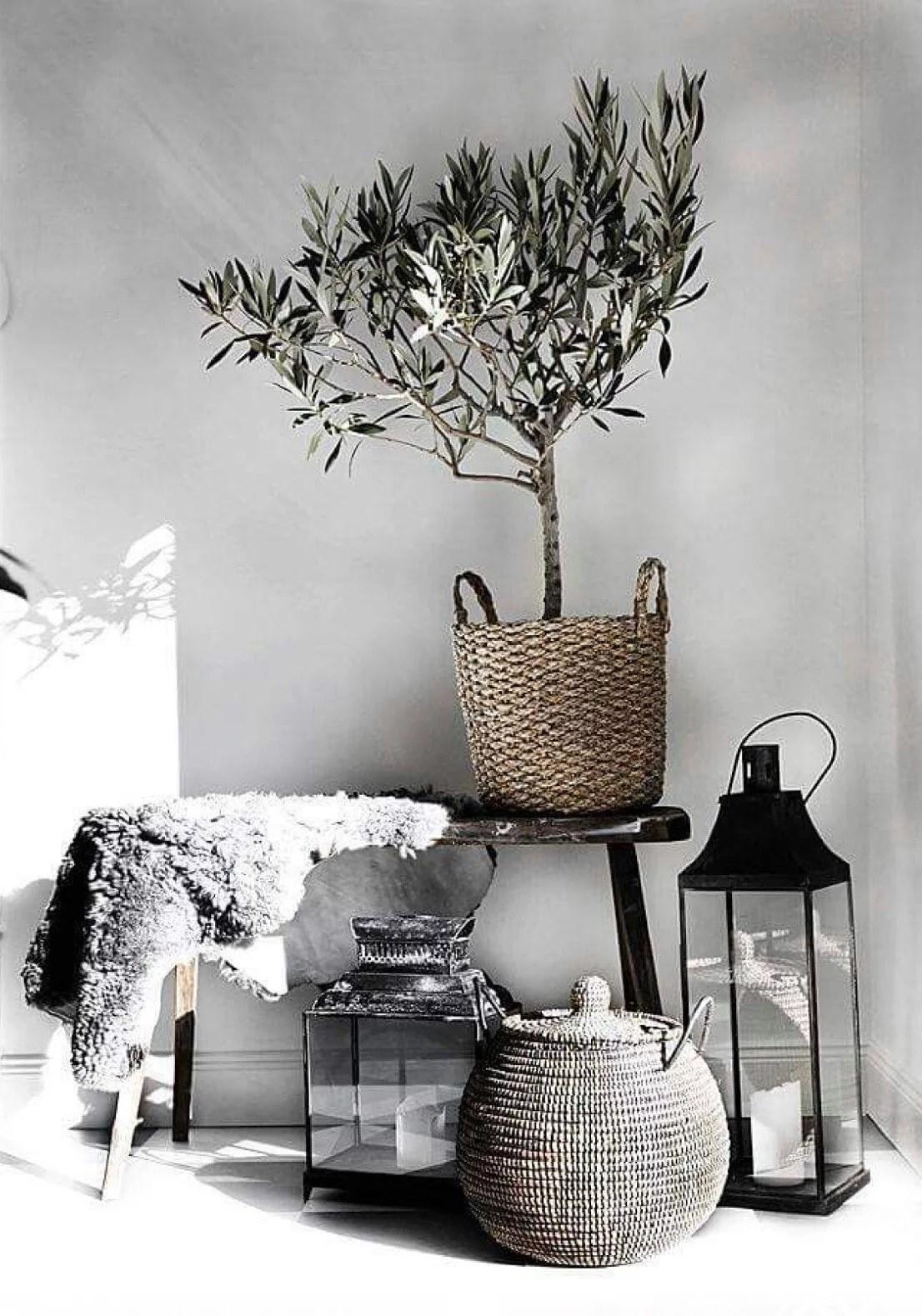 Tips! Billiga olivträd