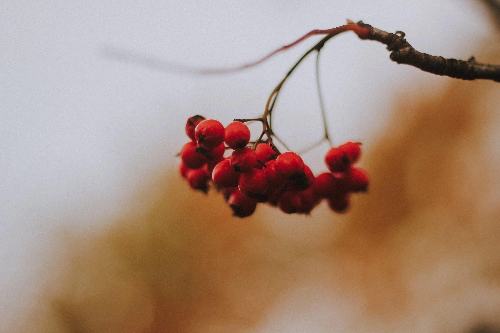 Rött.