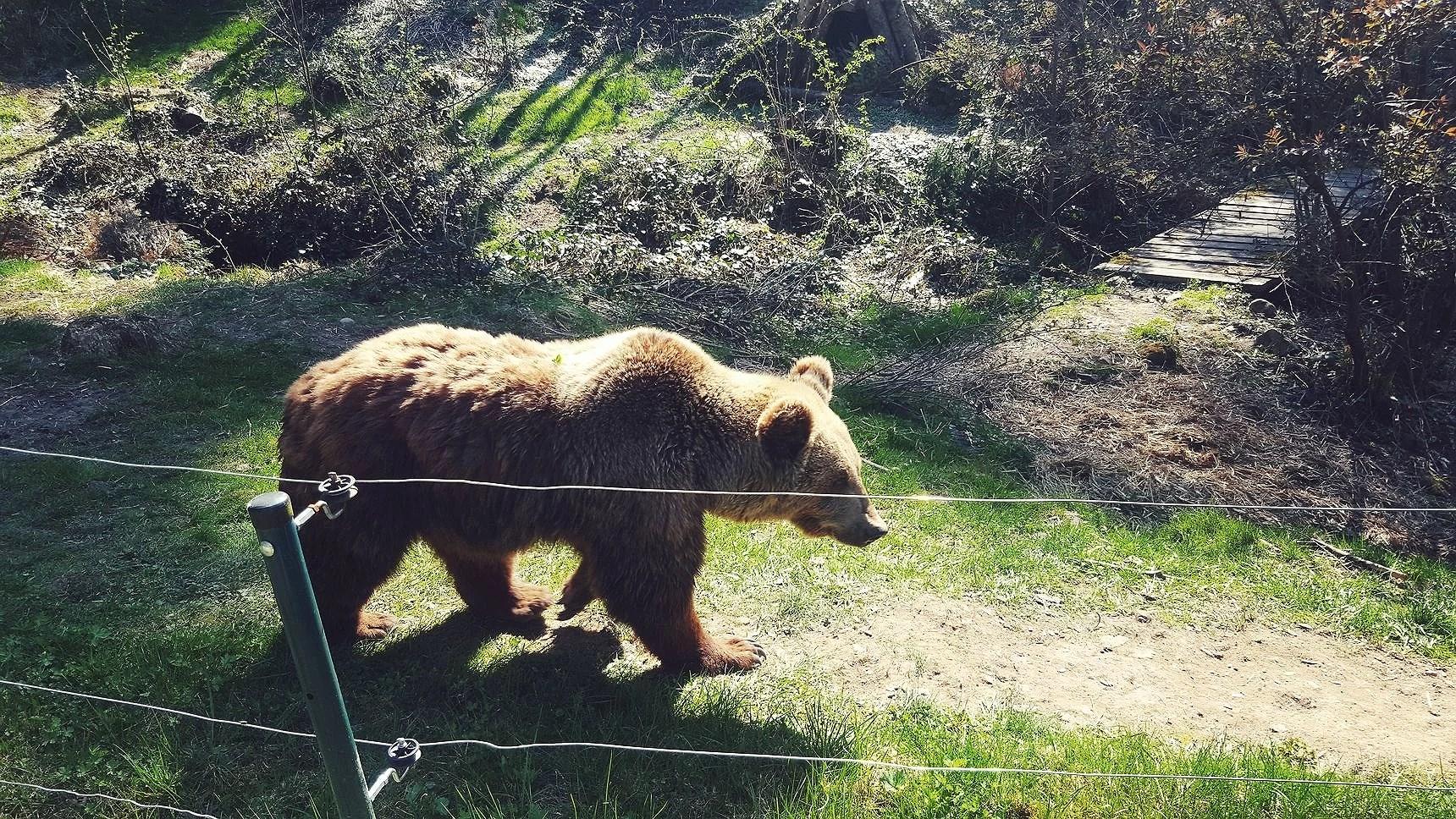 Bärenpark Bad Rippoldsau-Schapbach