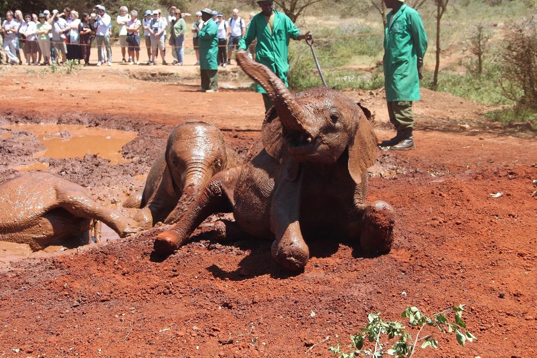 Elefantbarnhem och giraffercenter