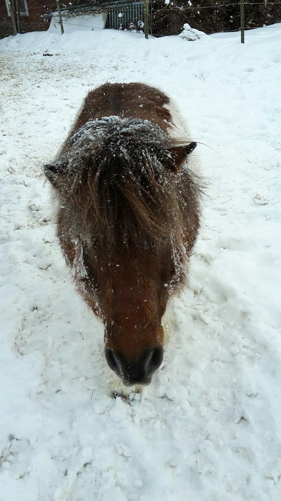 Snöigt värre!