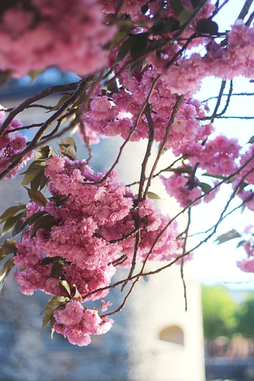 glass, blommor och solsken