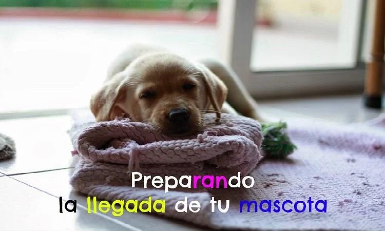 Preparando la llegada de tu mascota