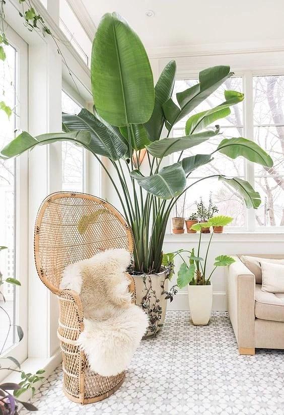 Deco: inspiración tropical