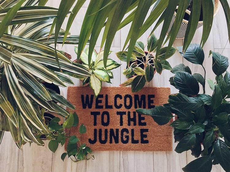 Guía para el cuidado de mis plantas