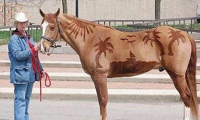 klippt häst