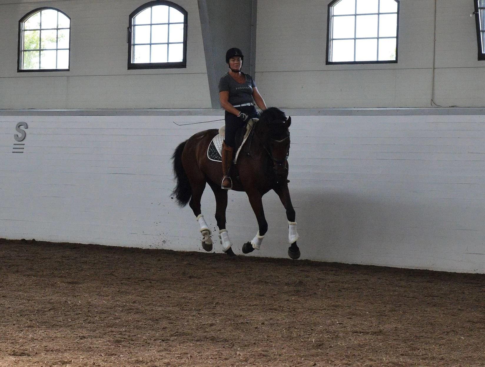Vad hästen gör är ett resultat på din ridning!!