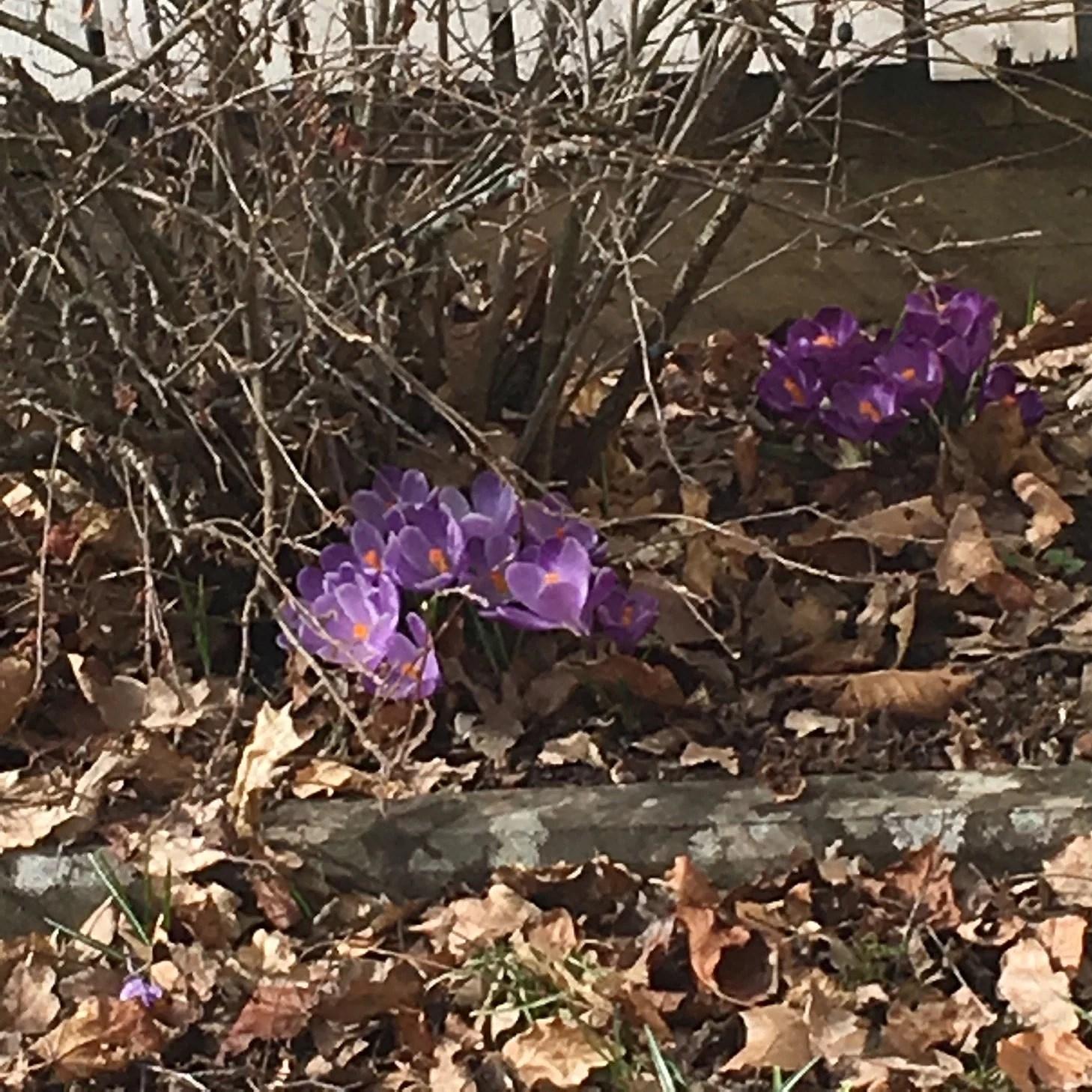 Härligt att våren nu är på g på riktigt