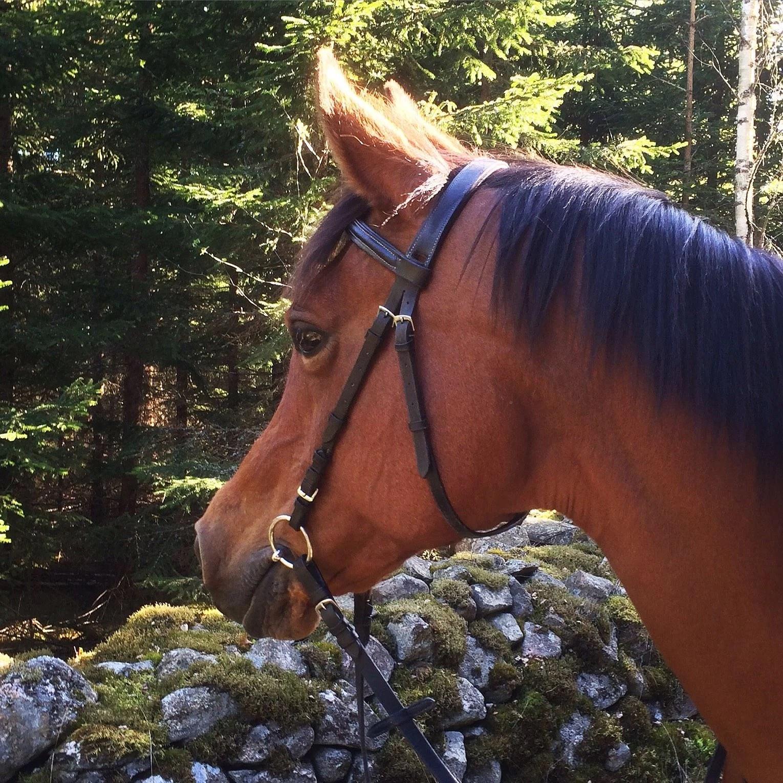 Min häst gör mig religös