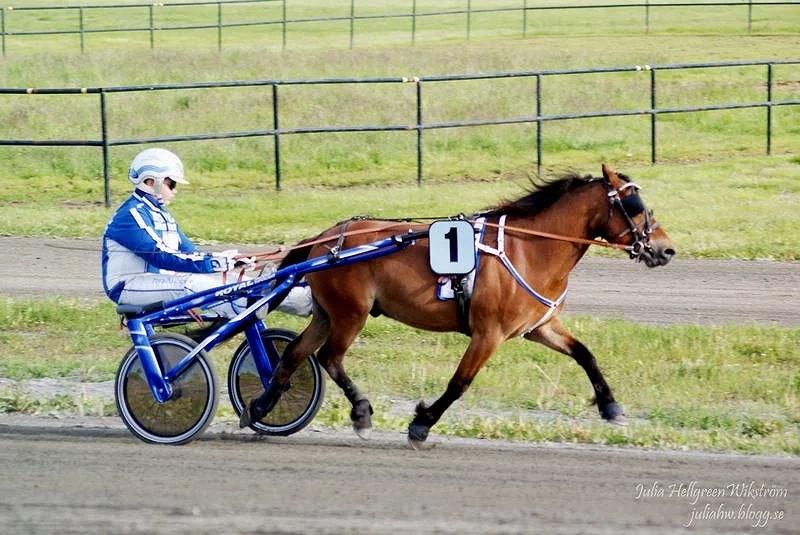 Midsommartravet Skellefteå, Ponnyloppet-Foto 2014