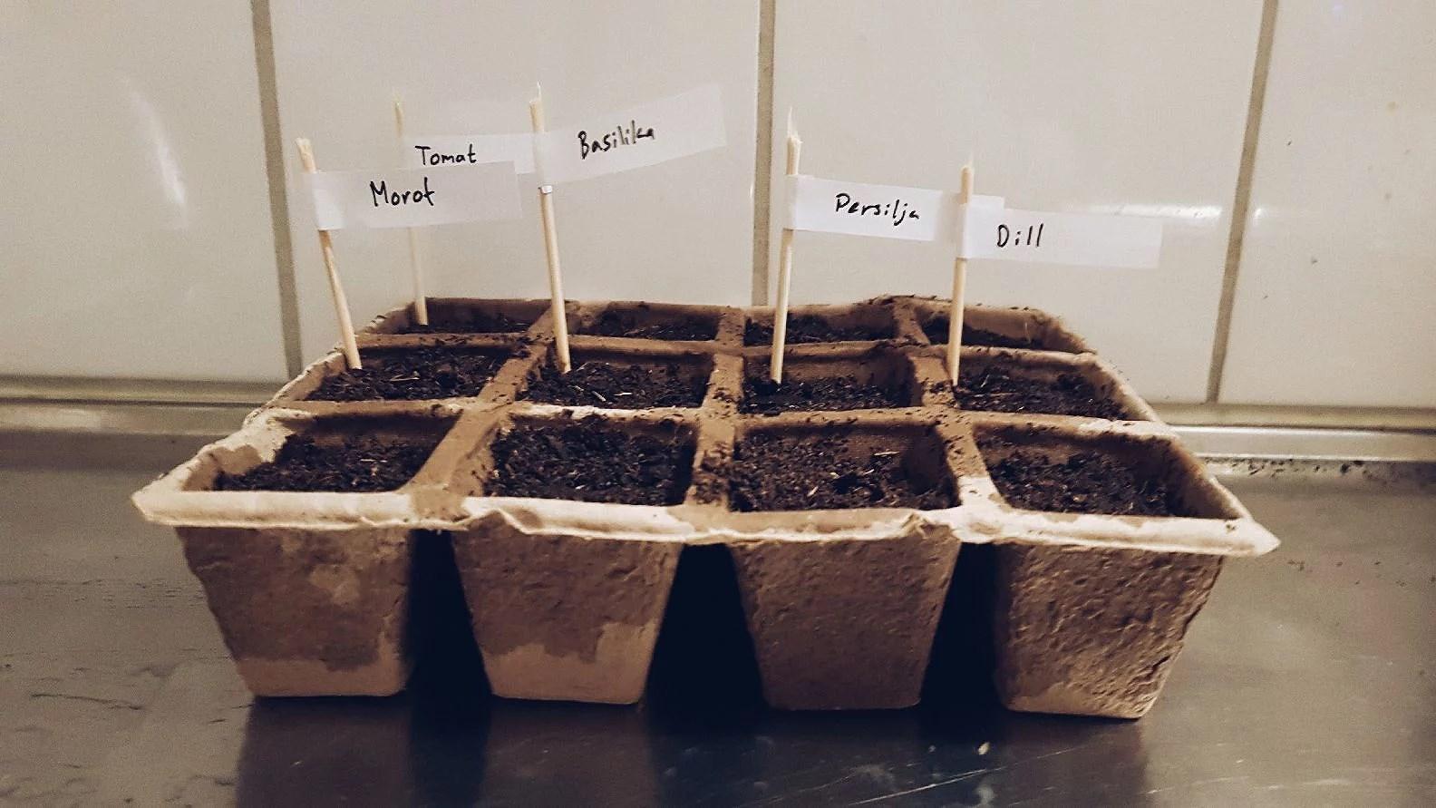 Plantering & nya växter