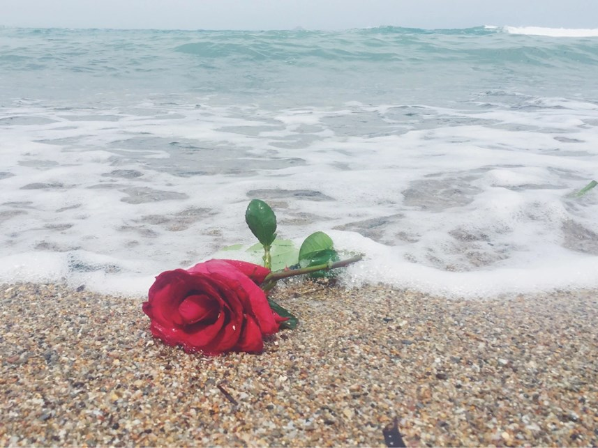 Abandoned rose by the beach in Cabo de palos