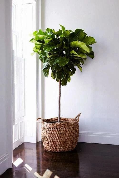 stor växt inne