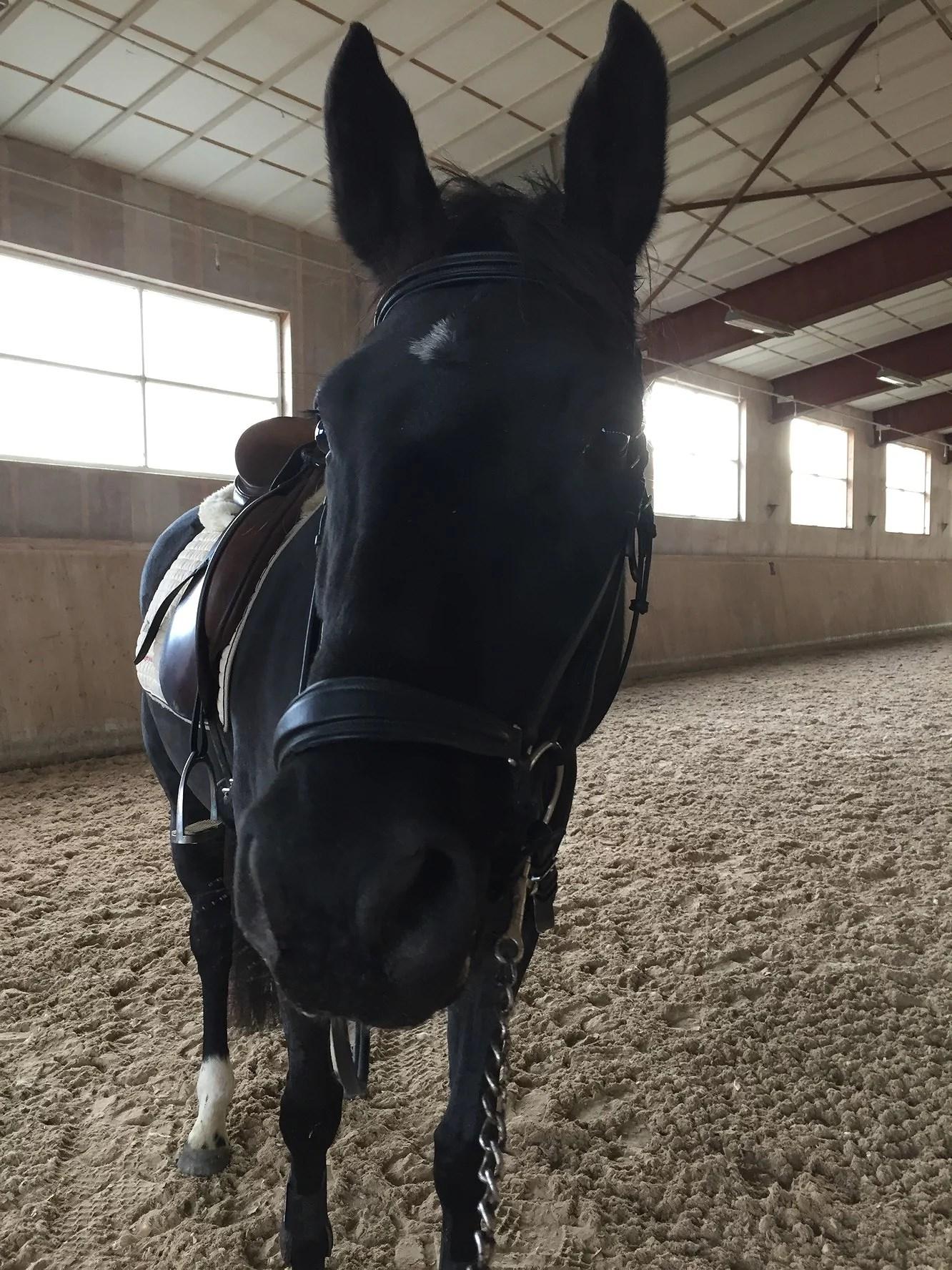 Några timmar på hästryggen