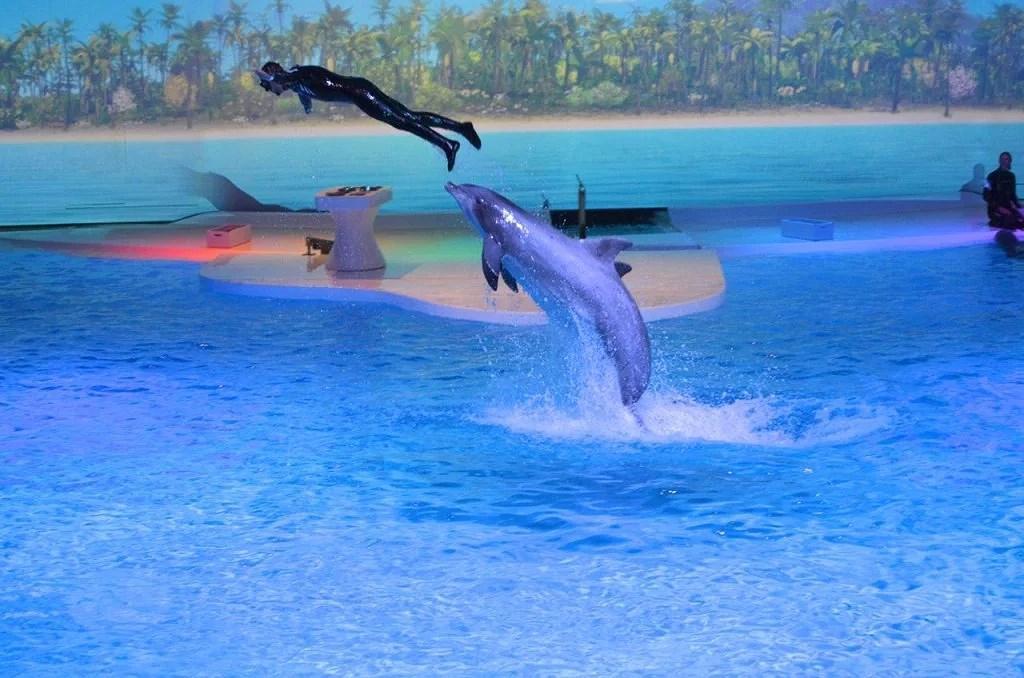 delfiner10