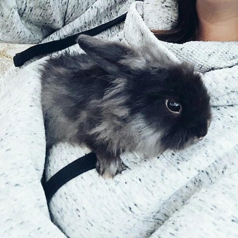 en ny liten vän