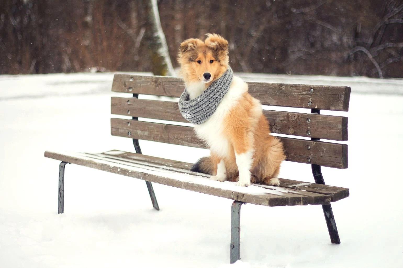 FOTO - Vintervalpen