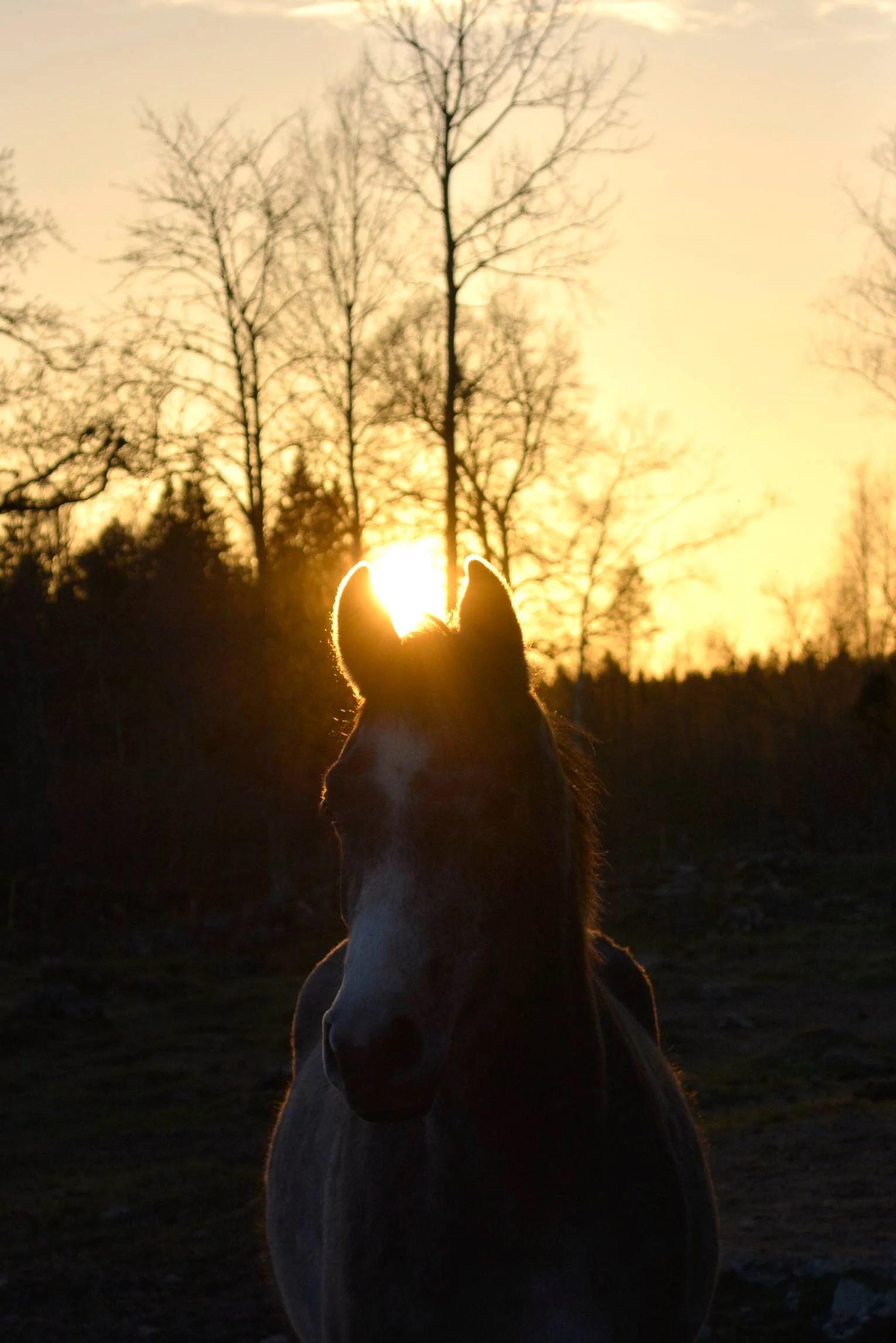 Solnedgången...