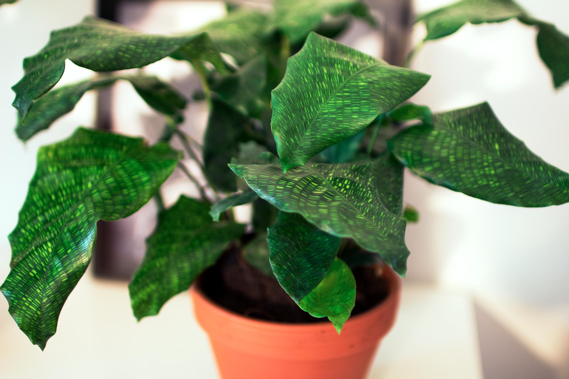 Finner lycka i växter!