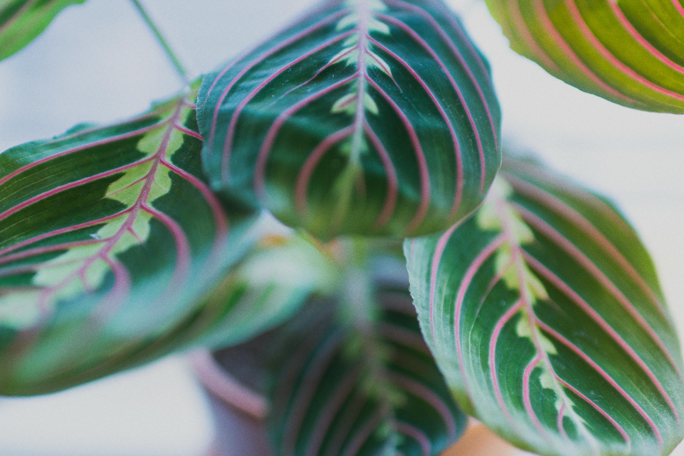 Växtfredag - moses stentavlor
