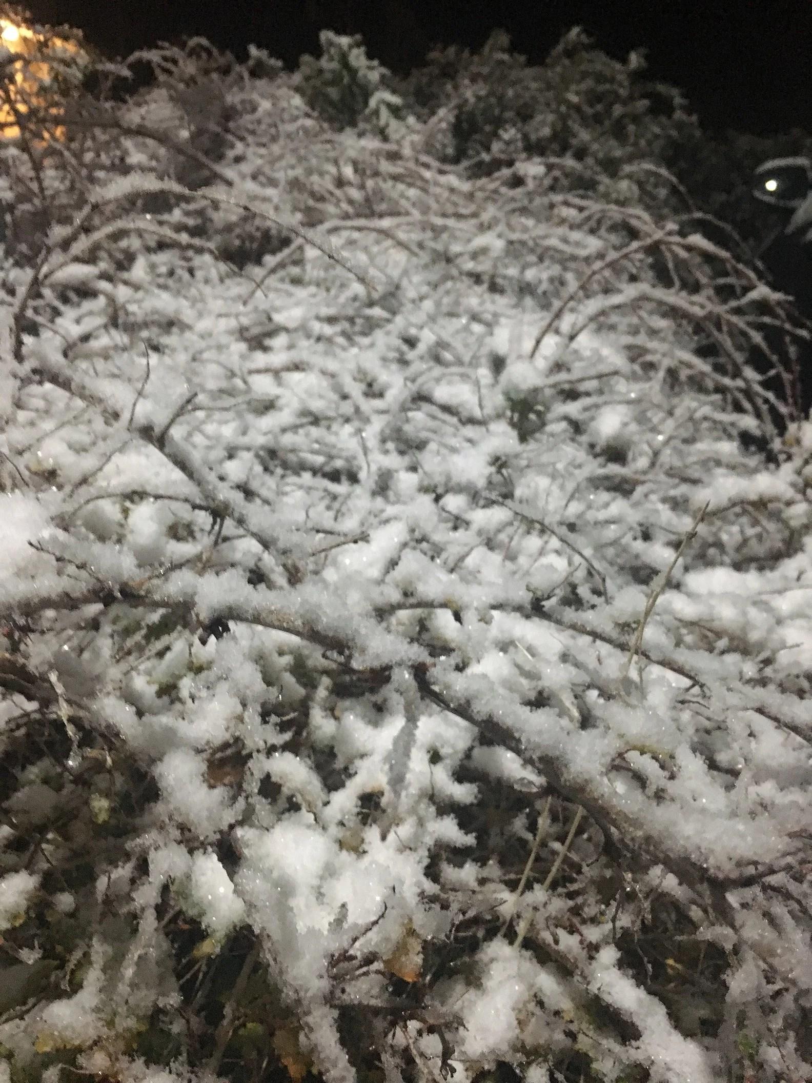 Vinterns första snö