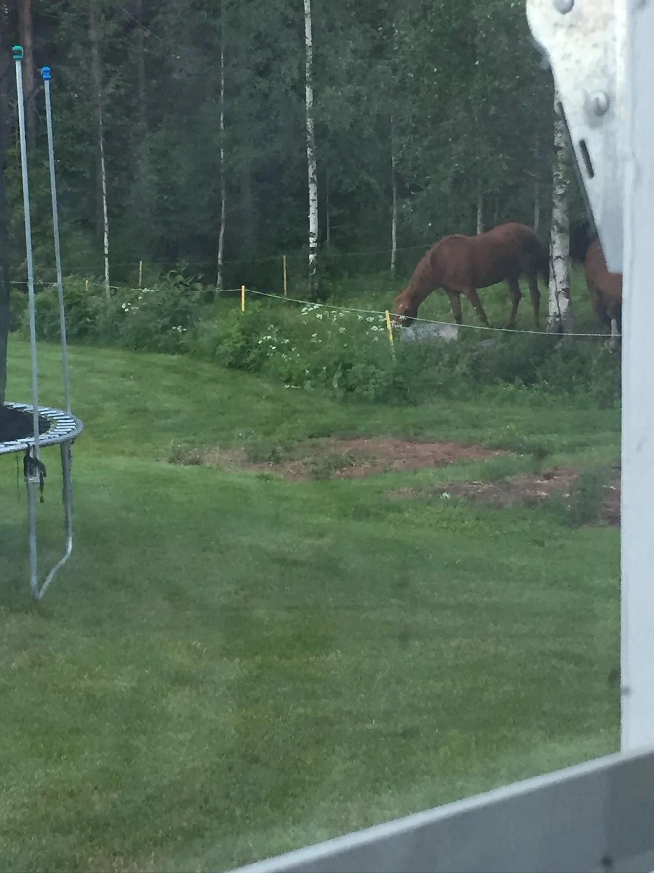 Nu är hästar äntligen hemma