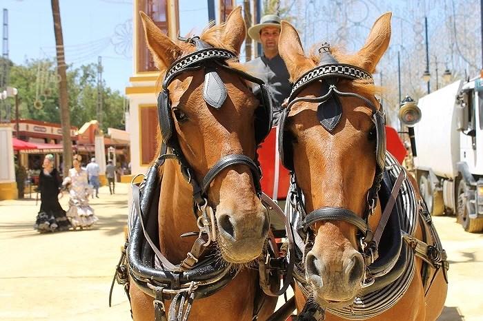 Impresionantes caballos de la Feria de Jerez