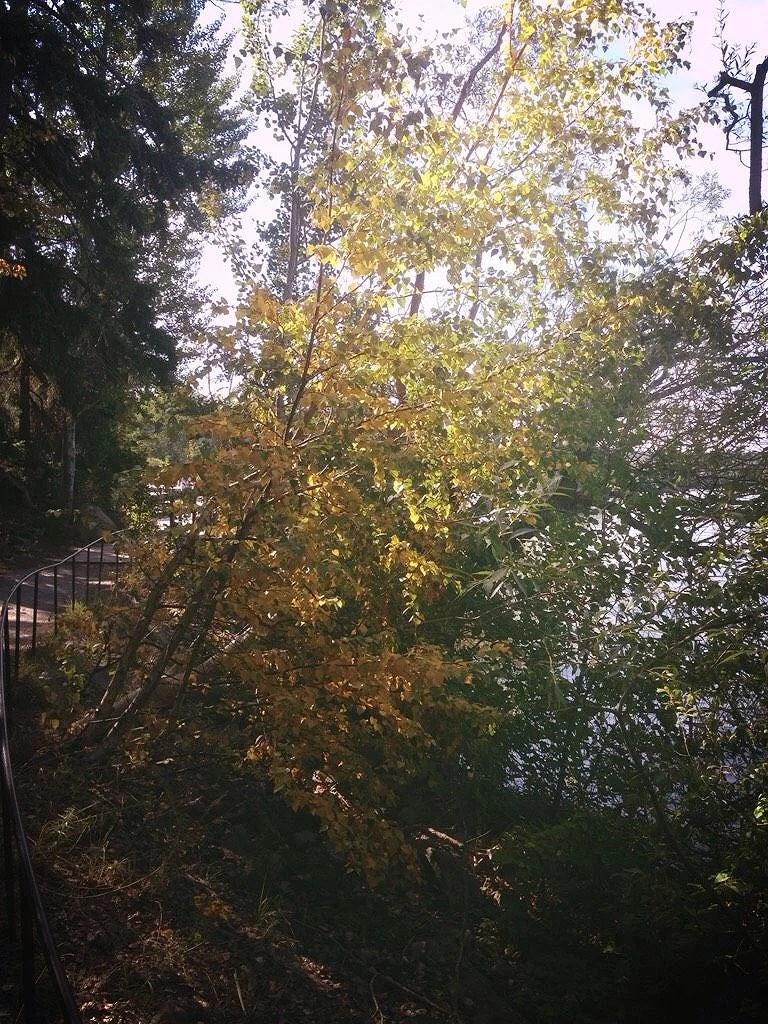Hösten är påväg